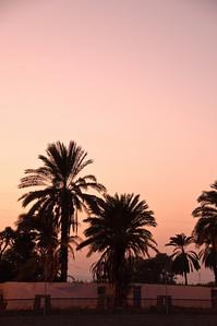 2009-10 Egypt-9166