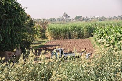 2009-10 Egypt-9190