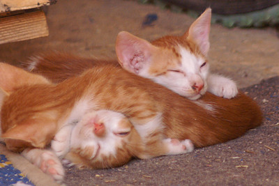 Little kittens in a barn just off the main road of Dahab