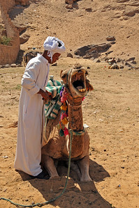 On the west bank of the Nile - we hire a camel to go to the St. Simeon monastery