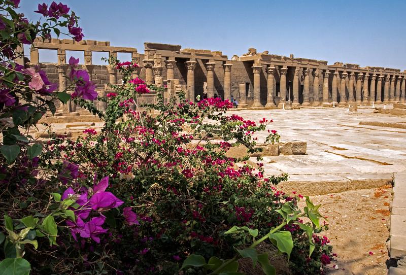 Egypt-8613