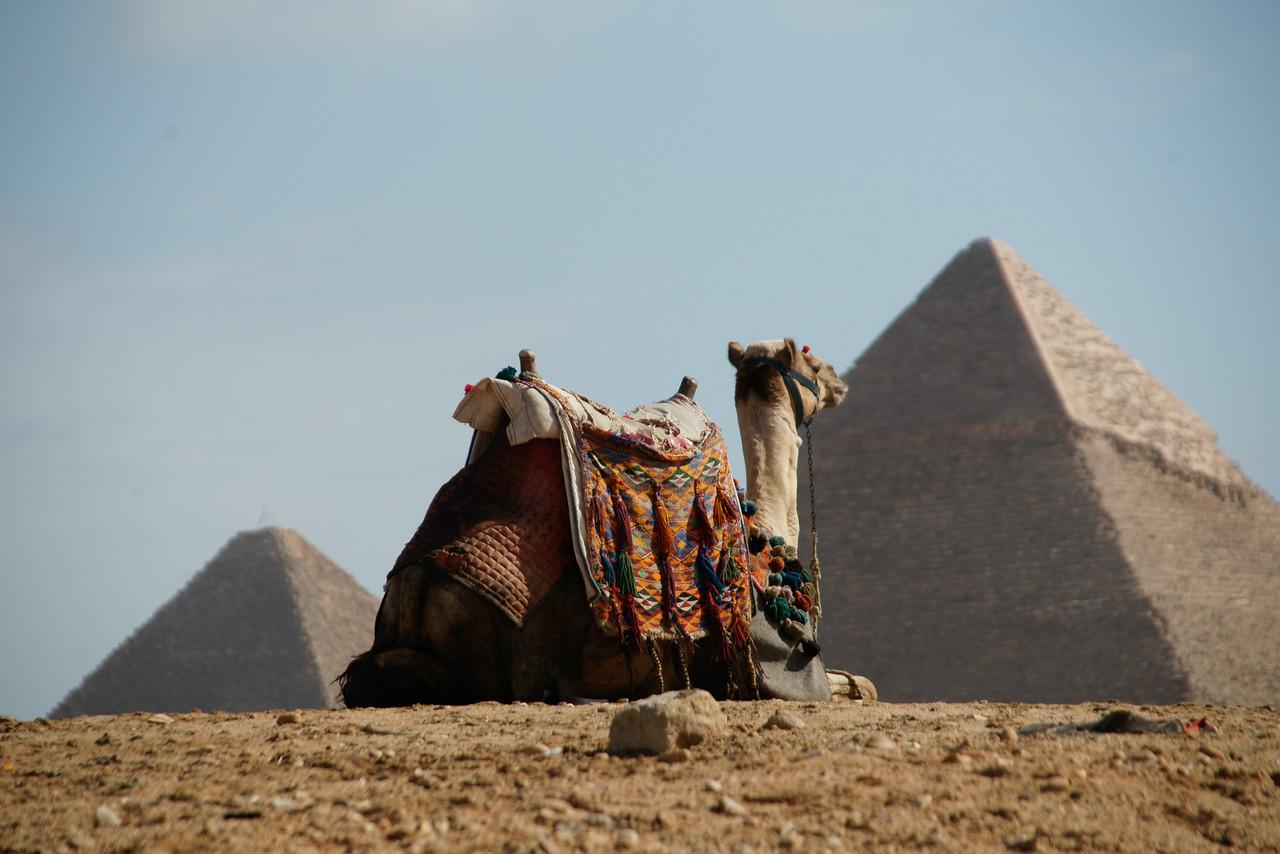 Camel Sitting at Pyramids