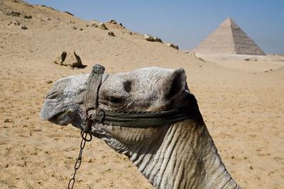 Egypt_NGingold_16