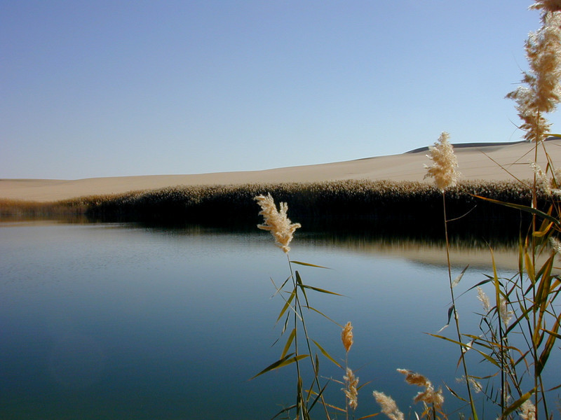 Freshwater lake amidst the desert dunes, near Siwa.