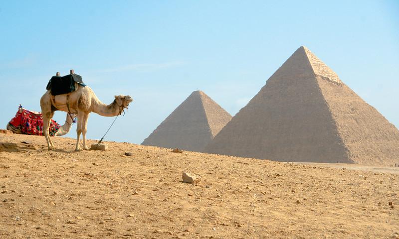 Camels at Pyramids
