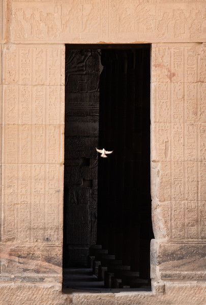 A dove flies through a doorway to the Philae Temple
