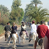 Taking the Egyptian Mercedes (aka donkeys) to the Valley of the Kings - on the west bank of the Nile across from Luxor.