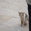 Beuatiful cat turned out to be a big distraction to our tour guide