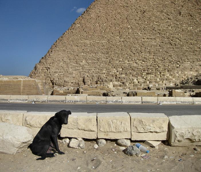 Dog at Giza.