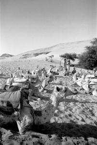 Camel_taxis_aswan