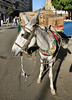 Donkey power, Aswan.