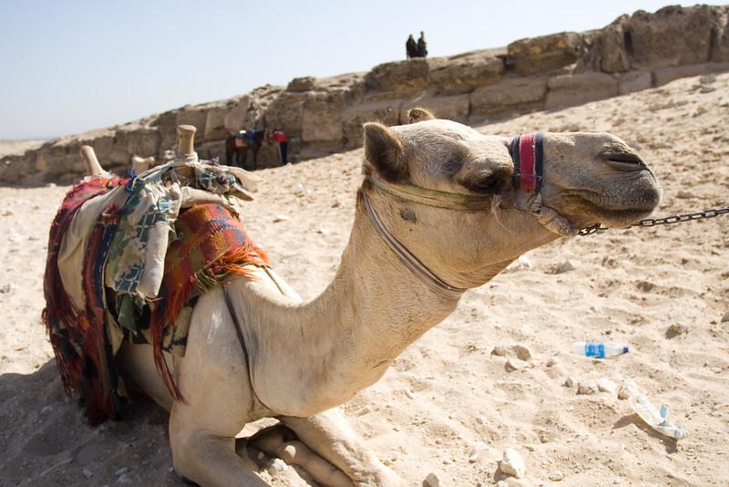 Egypt_NGingold_18