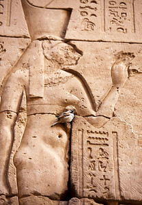 Perched at Edfu Temple
