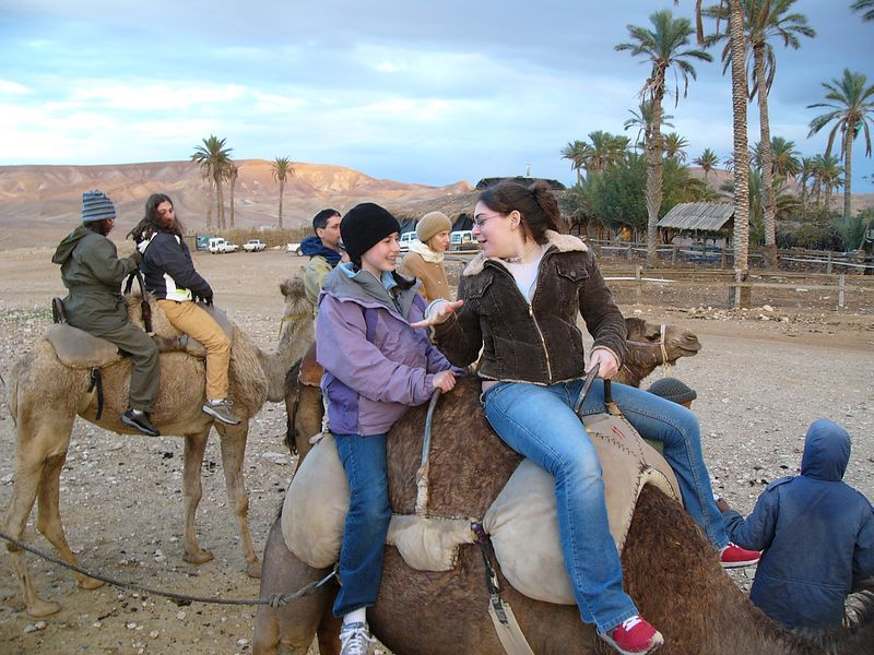Camel Train 3