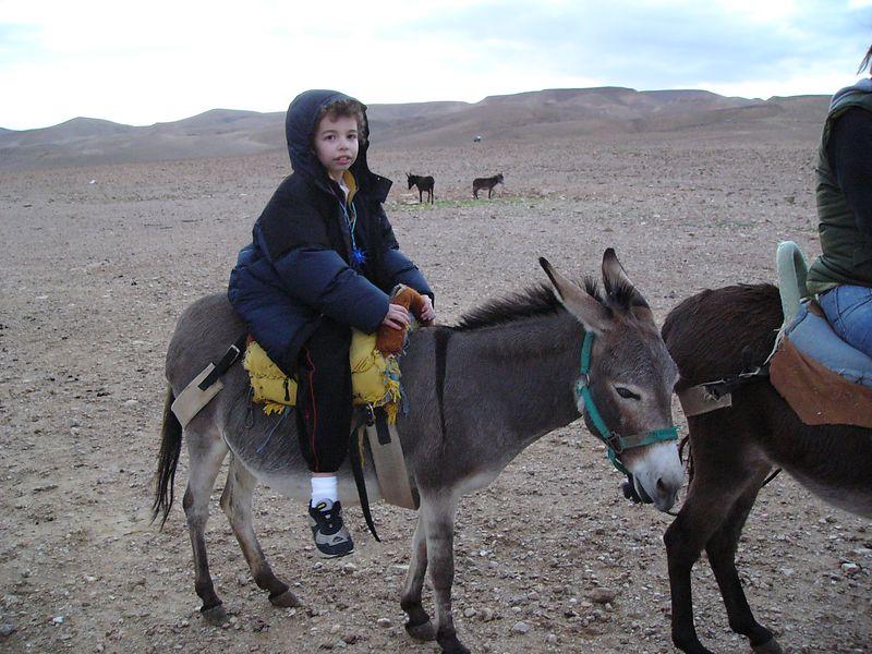 Tavi's Donkey