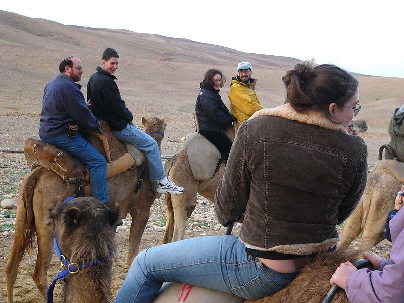 Camel Train 2