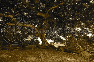 This photo just makes me want to picnic. Did I mention, I love this tree!