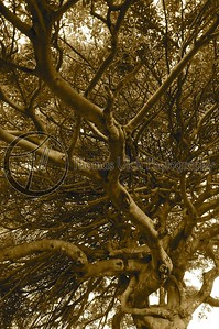 This was taken at Carlitos farm. This tree just amazed me. I took a hundred photos of this tree.
