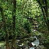 Going green. El Yunque National Forest