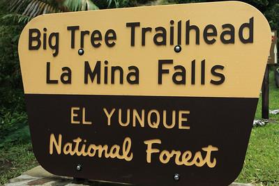 Puerto Rico - El Yunque National Forest