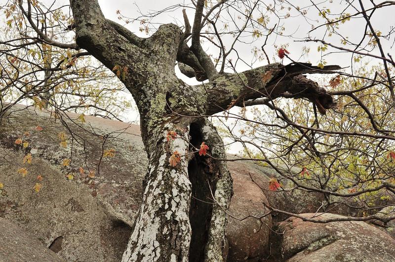 Artsy oak
