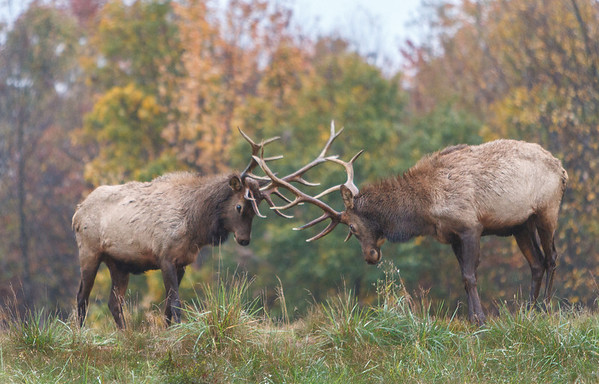 Elk Country Pennsylvania