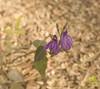 Garden-DSC_0009