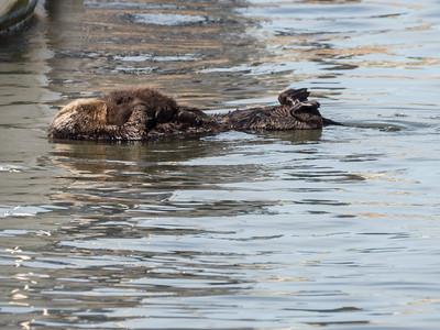 Elkhorn Slough Safari, 2017-11-24