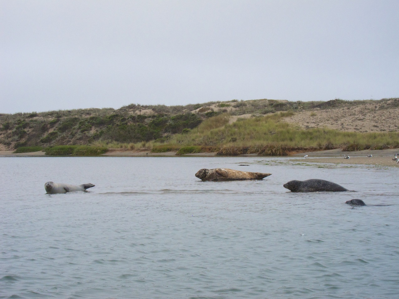 Some seals