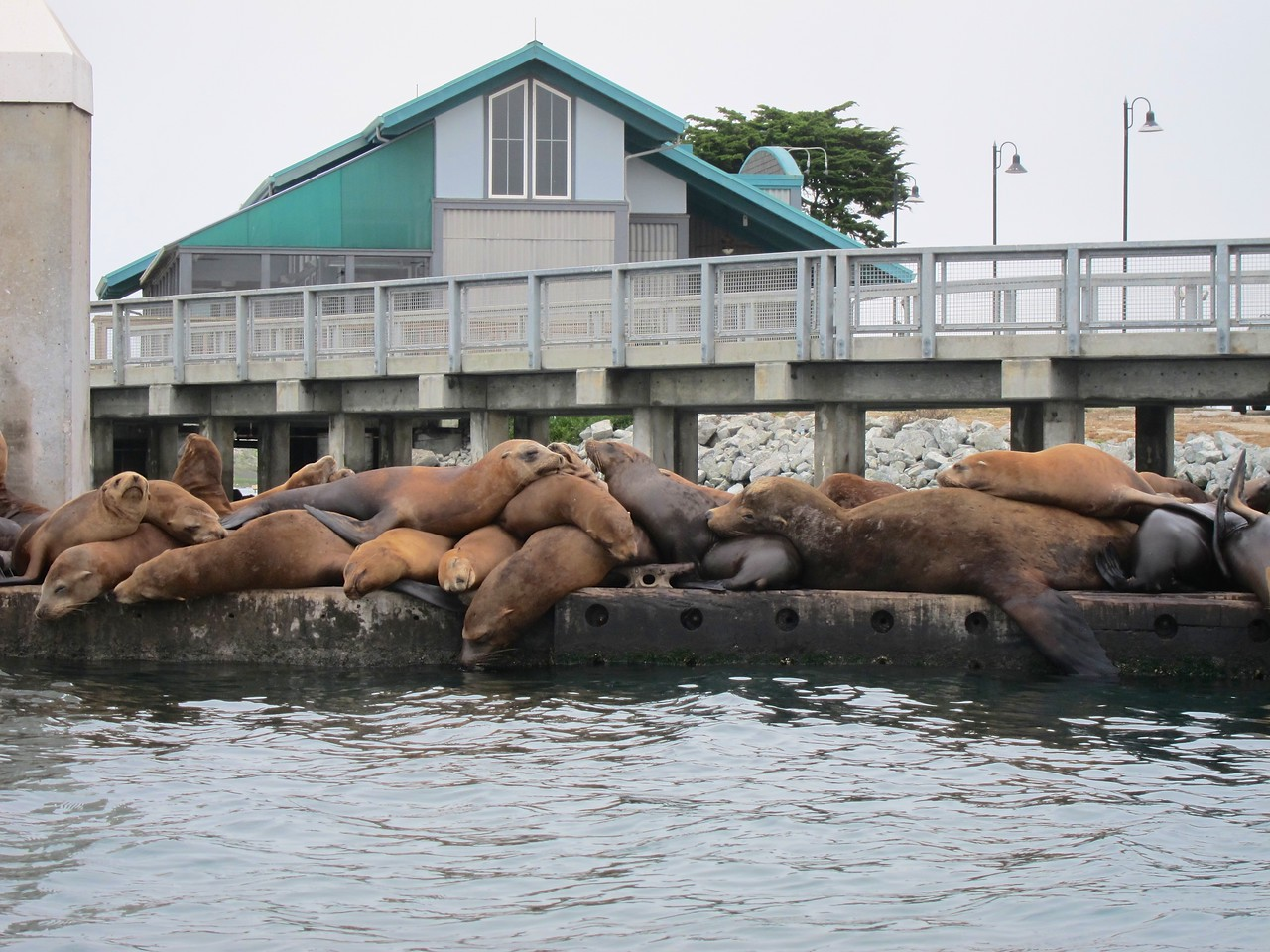Sea lions hard at work at the office