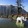 Elephant Bathing Pool - note: no actual elephants, but lots of monkeys