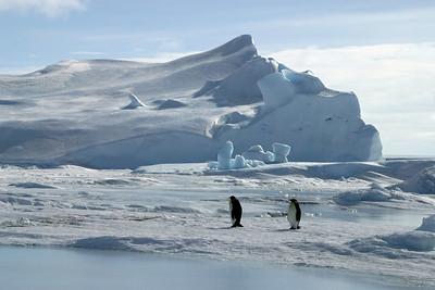 Emperor Penguins of Snow Hill Island - Oct 2006