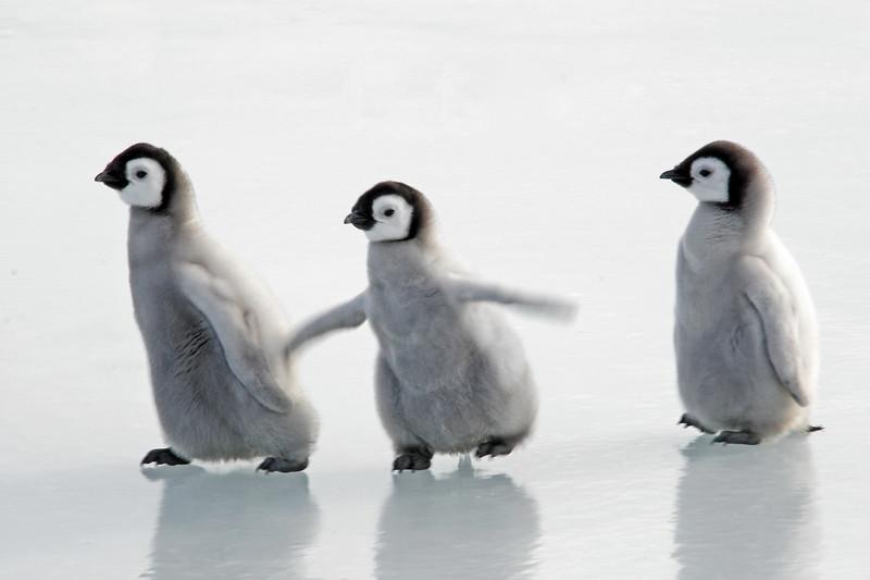Chicks on Ice