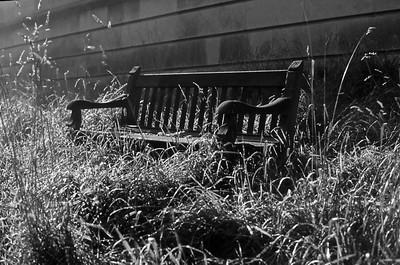 Bench on Petersham Commons