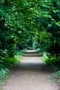 Addison's Walk, Magdalen College