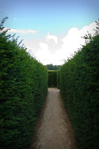 In the maze at Leeds Castle