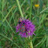 """Flora and fauna found along our hiking path. (""""Narrow-bordered Five-spot Burnet moth""""?)"""