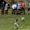 Terrier racing at Chatsworth House Country Fair