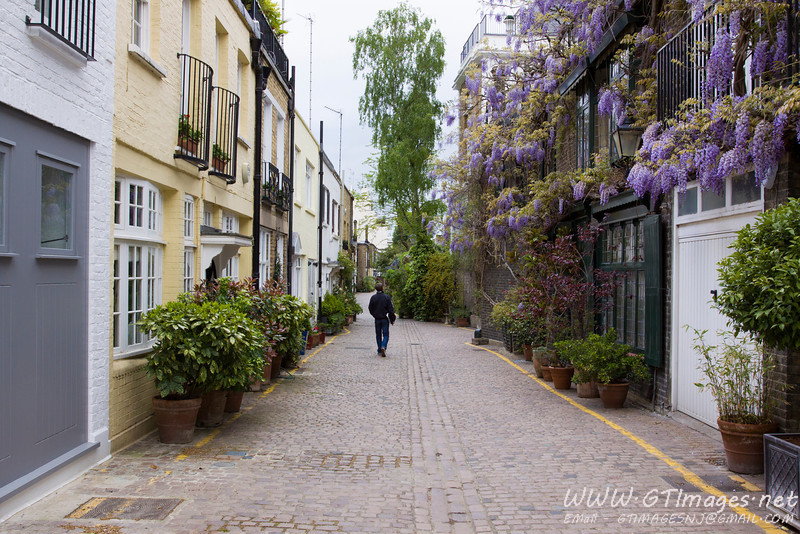 Kensington side street - many of the townhouses have wisteria crawling up the side of the building...