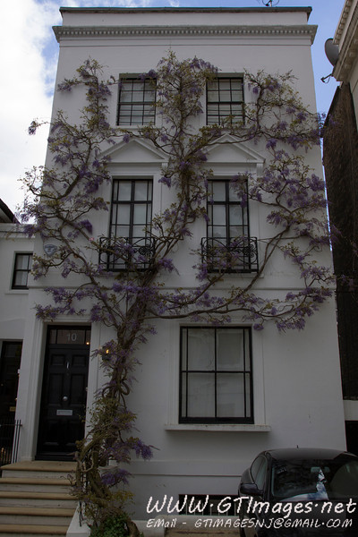 Wysteria growing on a townhouse....