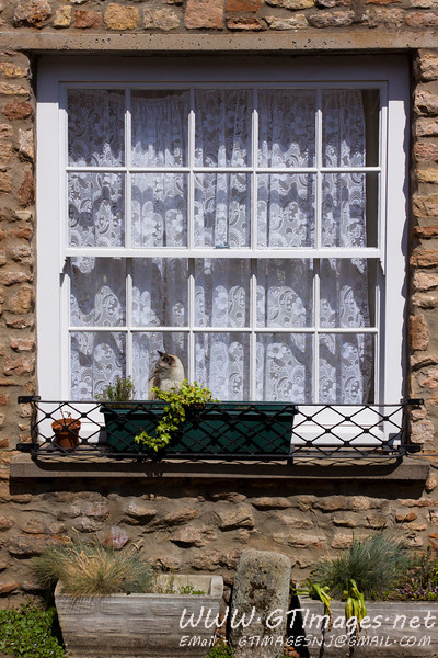 Wells, England - Loved this cat sunning itself in the window. ....seemed to be having a wonderful time...
