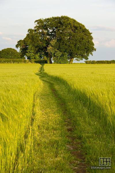 Field near Great Rissington