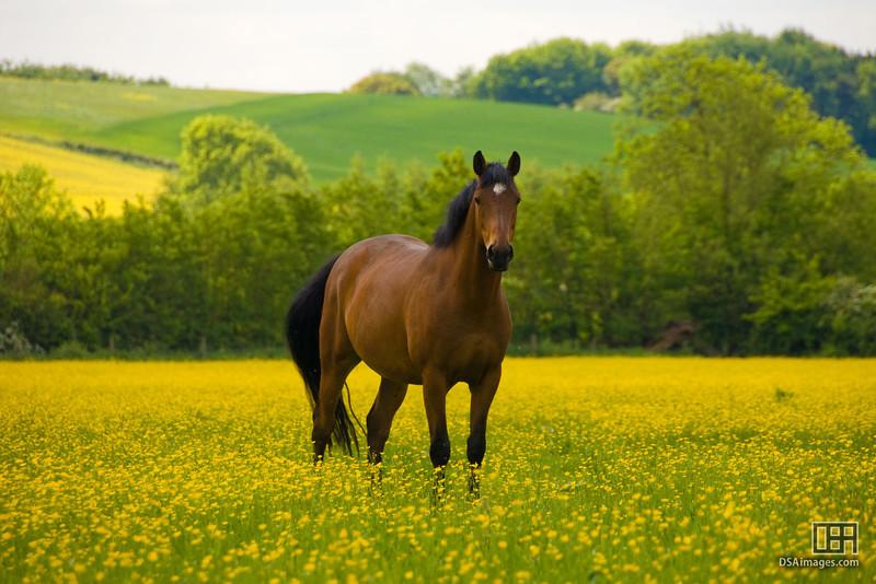 Horse near Charingworth