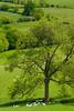 The view near Windmill Hill