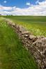 Stone wall near the Snowshill Lavender Farm