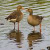 Birds on Derwent Water, Lake District