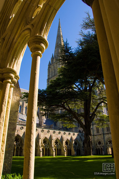 From the Cloisters to Salisbury Cathedral