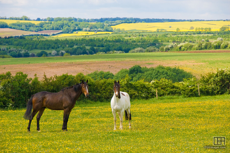 Horses in their field