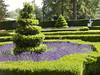 Queen's garden.  Garden hedging.