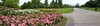 Queen Mary's Gardens in Regent's Park -  Pano